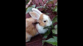 видео Карликовые кролики: питомник карликовых кроликов