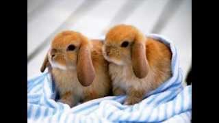 милые кролики
