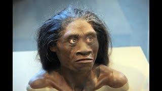 Ученые объяснили почему вымерли неандертальцы. От кого произошел  человек.  Загадки древности.
