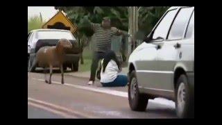 Приколы козлов