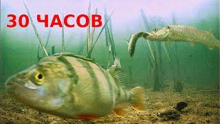 ТАКИХ ЩУК Я ЕЩЕ НЕ ЛОВИЛ Ловля Щуки на Жерлицы Весной с Подводными камерами Подводная съемка