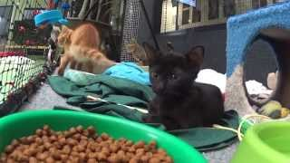 Rspca Qld's Kitten Fix For Valentine's Day