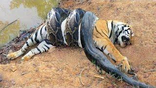 15 Deadliest Animals In Asia
