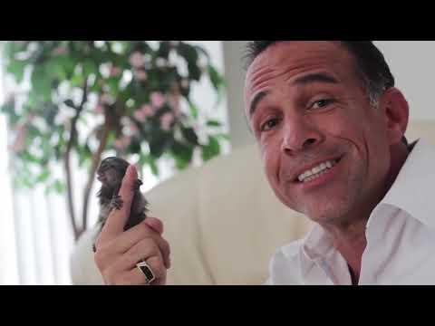 Baru Ditemukan, Monyet Terkecil Di Dunia Ini Bikin Takjub Ilmuwan