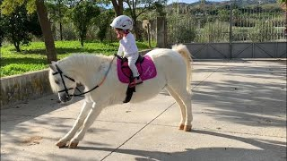 The cutest little toddler horse rider and her pony