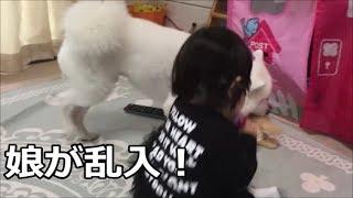 白い毛が特徴の日本スピッツ!かつては番犬としてうるさいくらい吠えて...