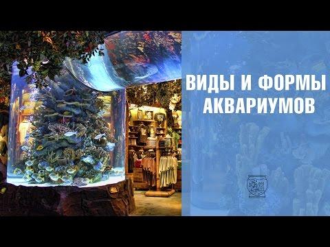 Виды и формы аквариумов 🌊 Обзор 🌊