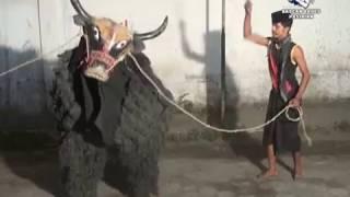Reog Gembong Bawono Banteng Ngamuk