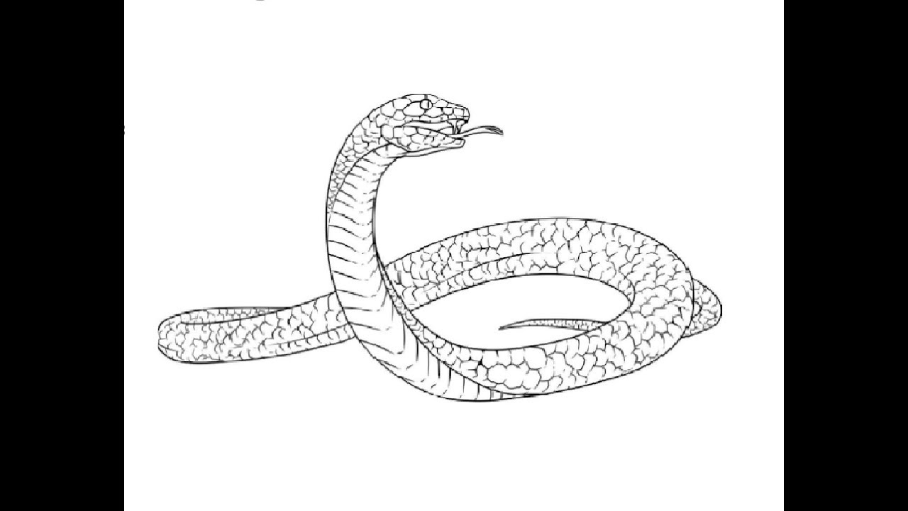 How to draw black mamba full body pencil drawing step by step