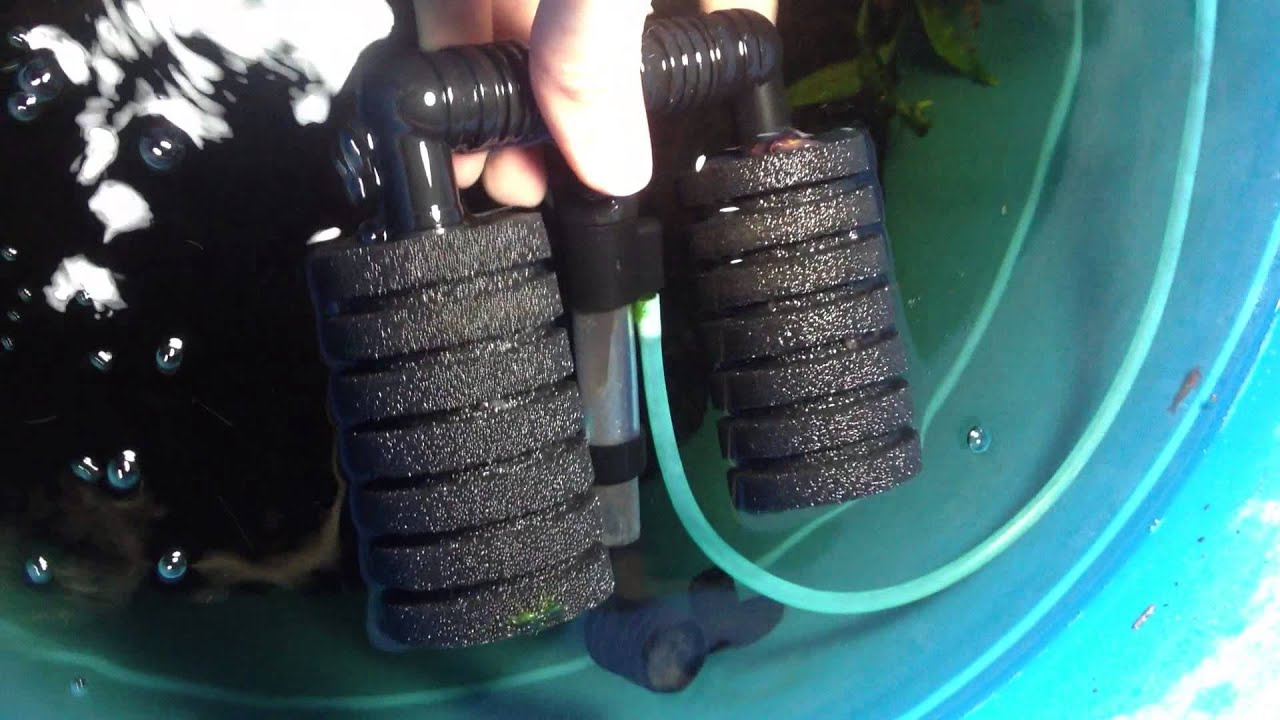 Cleaning a Double Sponge Filter for a Shrimp Tank - YouTube