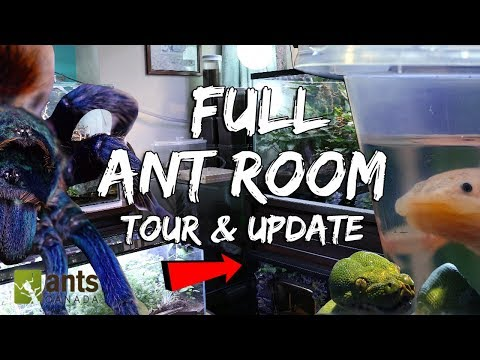Full 2019 Ant Room Tour & Update Video (Millions of Ants + Other Animals)