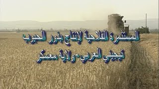 """قناة """"السنبلة """" الإرشادية: فلاح من معسكر نموذج لإنتاج بذور الحبوب INVA - ITGC"""