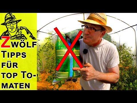 Die Wichtigsten Tipps Für Erfolgreiche Tomaten