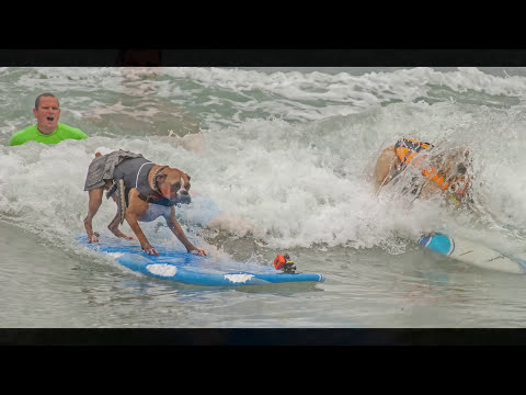 Petco 2014 Surf Dog Competition (long version)
