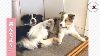 妹と遊びたいお姉ちゃん💖 でも、妹ちゃんがやる気になると…立場が逆転しちゃうの🐶【PECO TV】 thumbnail