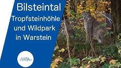 Bilsteintal | Tropfsteinhöhle und Wildpark in Warstein | Lucky Camper