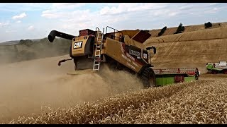 EXTREME WHEAT HARVEST ON SOUTH MORAVIA | BIG HILLS | CAT LEXION 580R | Agriculture