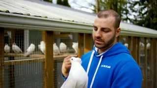 Birdman of Vancouver - Fancy Pigeons