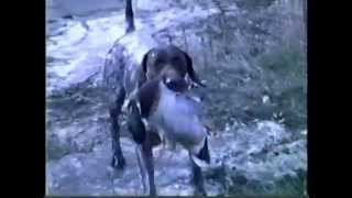 Final Part 5 Training Your Bird Dog