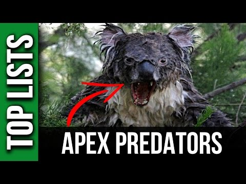 10 DEADLIEST Apex Predators