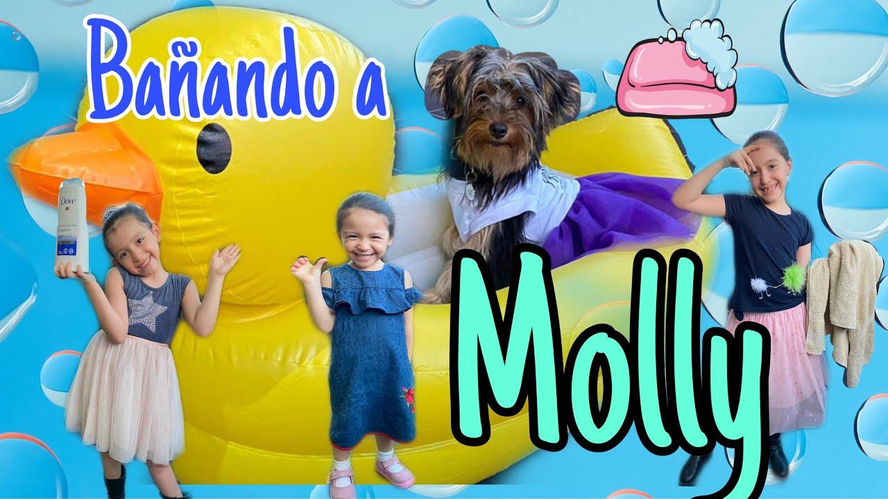 BAÑAMOS A MI PERRITA MOLLY