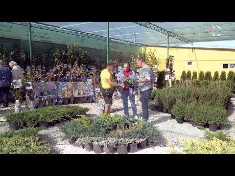 В СТ «Ветеран эскадры № 5» открылся новый садовый центр