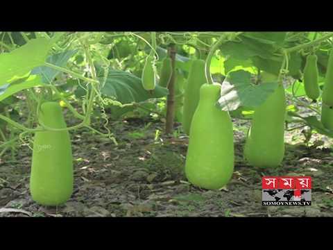 শীতকালীন সবজি উৎপাদনে ব্যস্ত ঠাকুরগাঁওয়ের চাষিরা | Vegetable Farming |