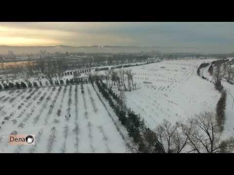 На острове Татышев в Красноярске укоренился «ПЕТР»