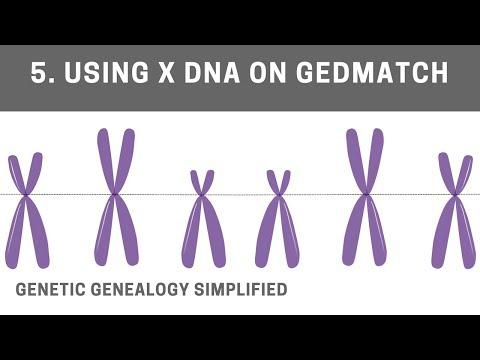Using X DNA on GEDmatch