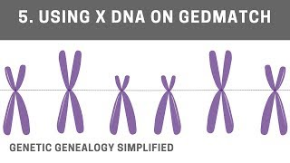 introduction to x dna gedmatch