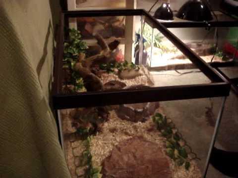 How To Setup A Ball Python Tank Aquarium Youtube