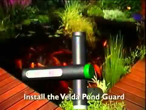 Velda pond guard heron deterrent youtube for Garden pond guards