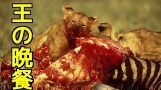 【野生動物の戦い】①ライオン狩り&捕食!シマウマを喰らう②ワニの顎が...