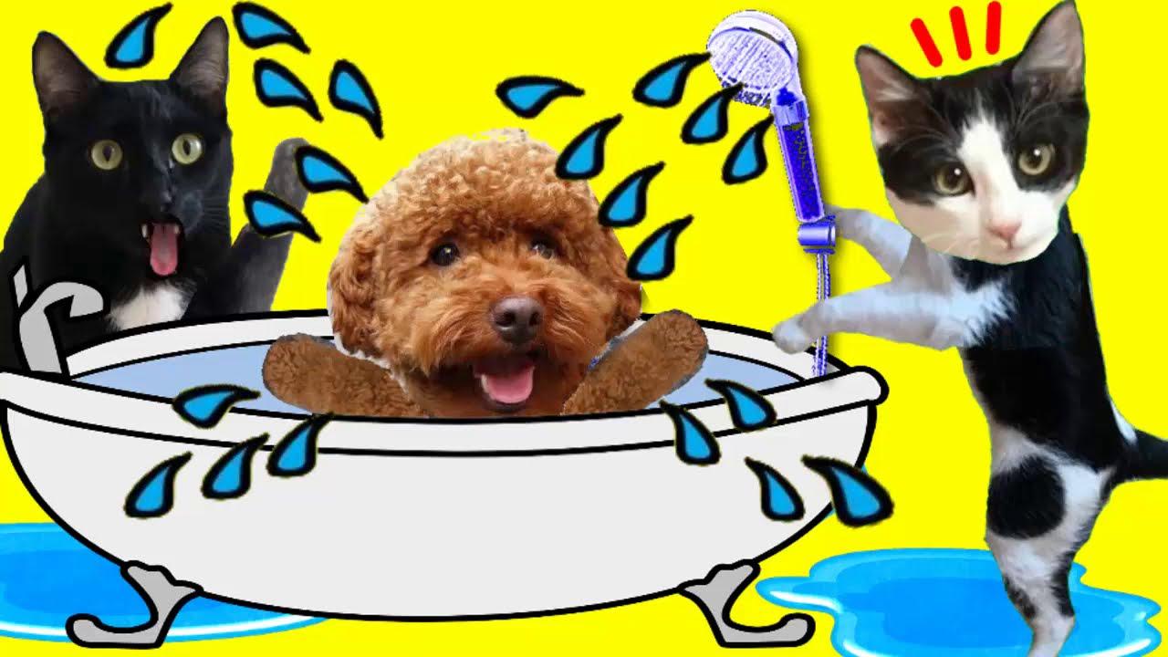 Gatos Luna y Estrella solos en casa CAP 6 Baño a mi perro / Videos de gatitos