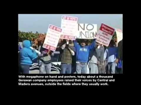 Gerawan Employees Protest