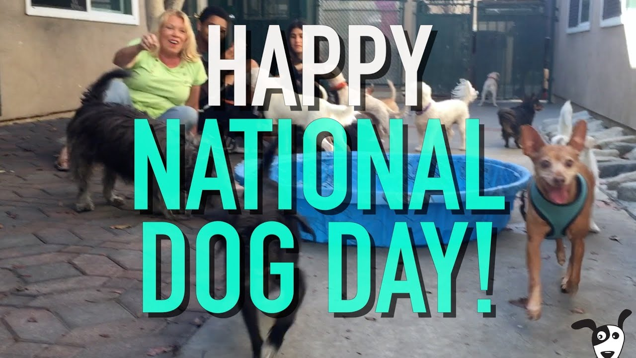Raise the woof: It's National Dog Day