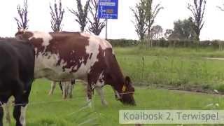 Terwispel (Friesland), melkveebedrijf met ca. 74 ha.