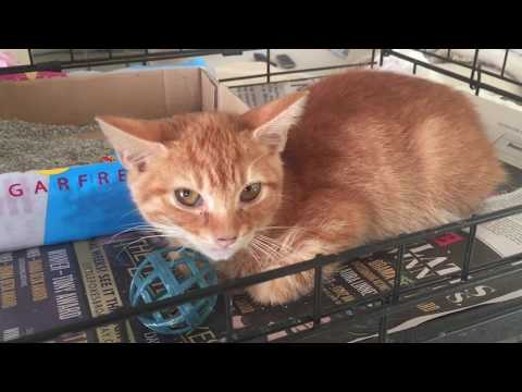 Making Friends with a Scared Cat or Kitten - FOXY, Part 1 - The Social Box