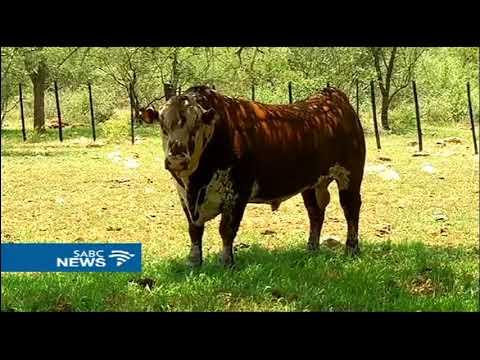 Farmers who fled Zimbabwe consider going back