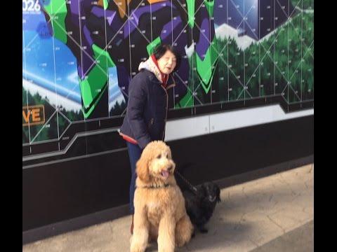 [ドッグラン]東名高速「下り」の足柄サービスエリアドッグランに寄ってみた。