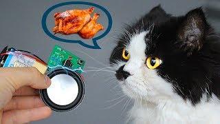 Как сделать электронную сигнализацию/ звонок для кошки