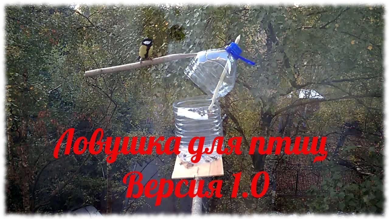 Лучок для ловли птиц своими руками фото 812