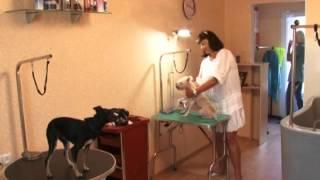 В Сочи открылся салон красоты для домашних животных «Мой любимец». Новости 24 Сочи