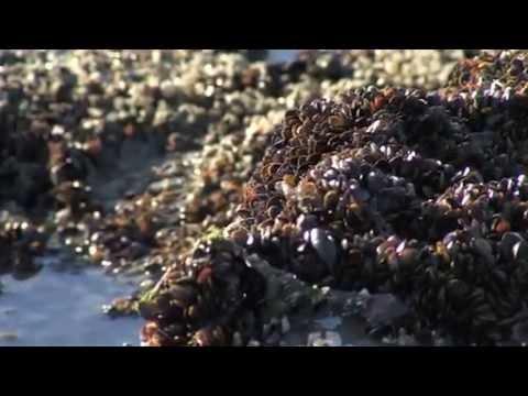 Vue sur Mer - Opal'Tv - La pêche aux moules au Portel