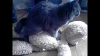 Кот жарит медведя