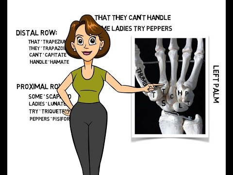 Learning the Carpals Bones of the Hand