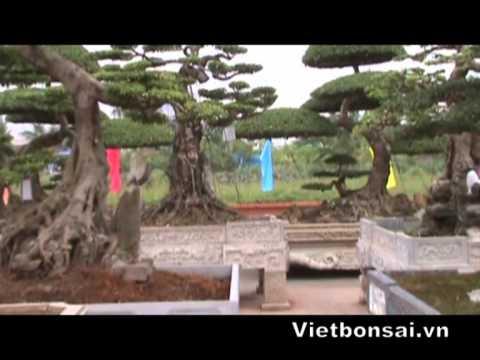 Nam Định, Cây cảnh, bonsai, Triển lãm SVC đồng bằng Sông Hồng - P2