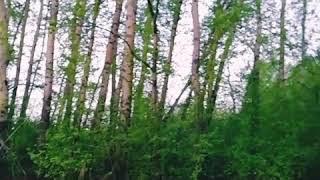 Видео. Природа. Релакс. Красивая музыка. Музыка. Лес. Приколы.