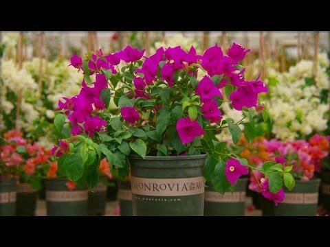 Monrovia - Grow Beautifully