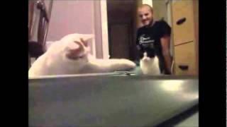 Kočky u běžícího pásu